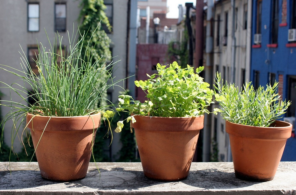 Container Gardening on Your Patio