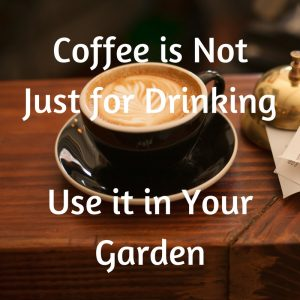 Coffee is Not Just for Drinking – Use it in Your Garden
