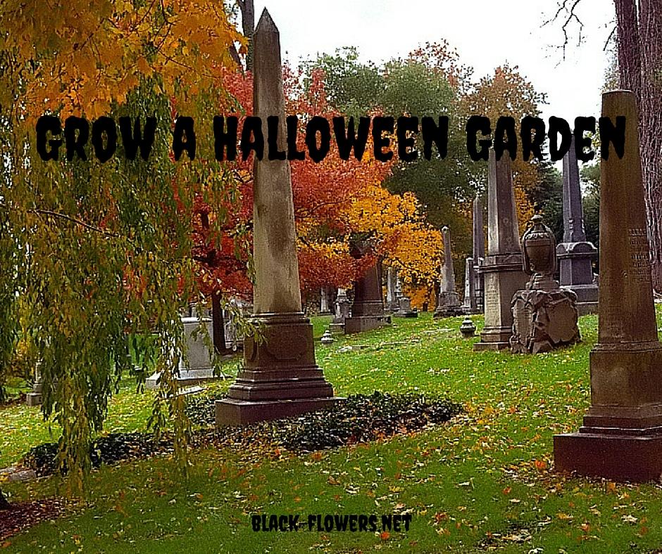 Grow a Halloween Garden