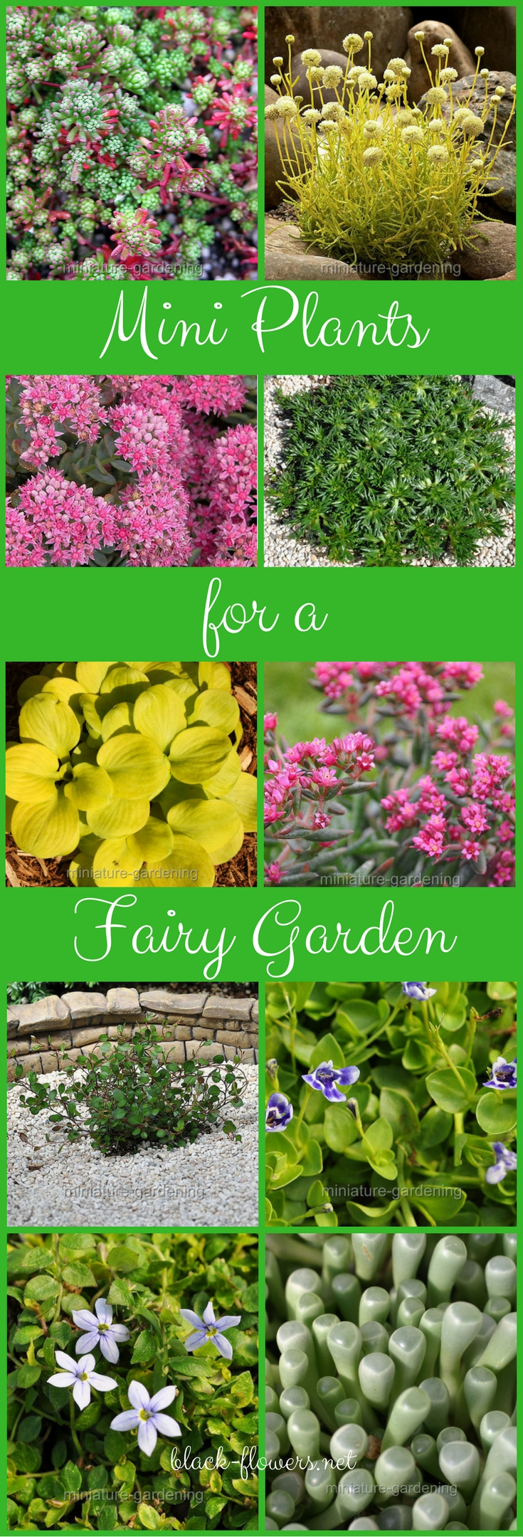 Mini Plants for a Fairy Garden