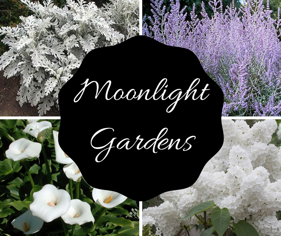 Enjoy Moonlight Gardens at Night