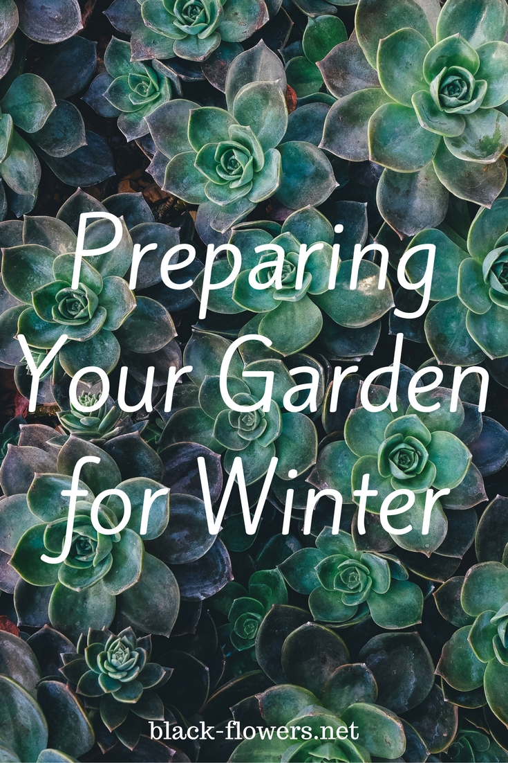 Preparing Your Garden for Winter