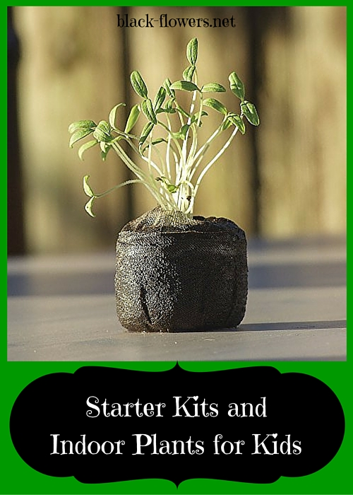 Starter Kits and Indoor Plants for Kids