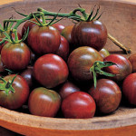 Tomatoes 'Black Cherry,' 'Black Plum' and 'Black'